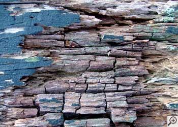 Dry rot damaging wood in Berwyn