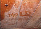 Mold Removal Services of Wilmington